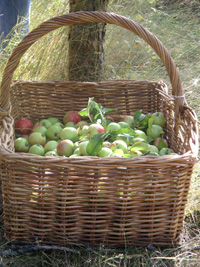 Divine Aromatic Apples
