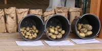 An exhibition of pest-resistant potato types